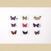 Butterflies - Original
