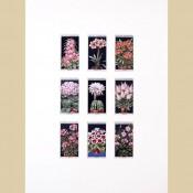 Flower Culture - Original