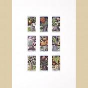 Flowering Trees and Shrubs - Original