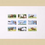 Horsemanship - Reproduction