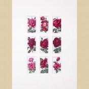 Roses - Original 2